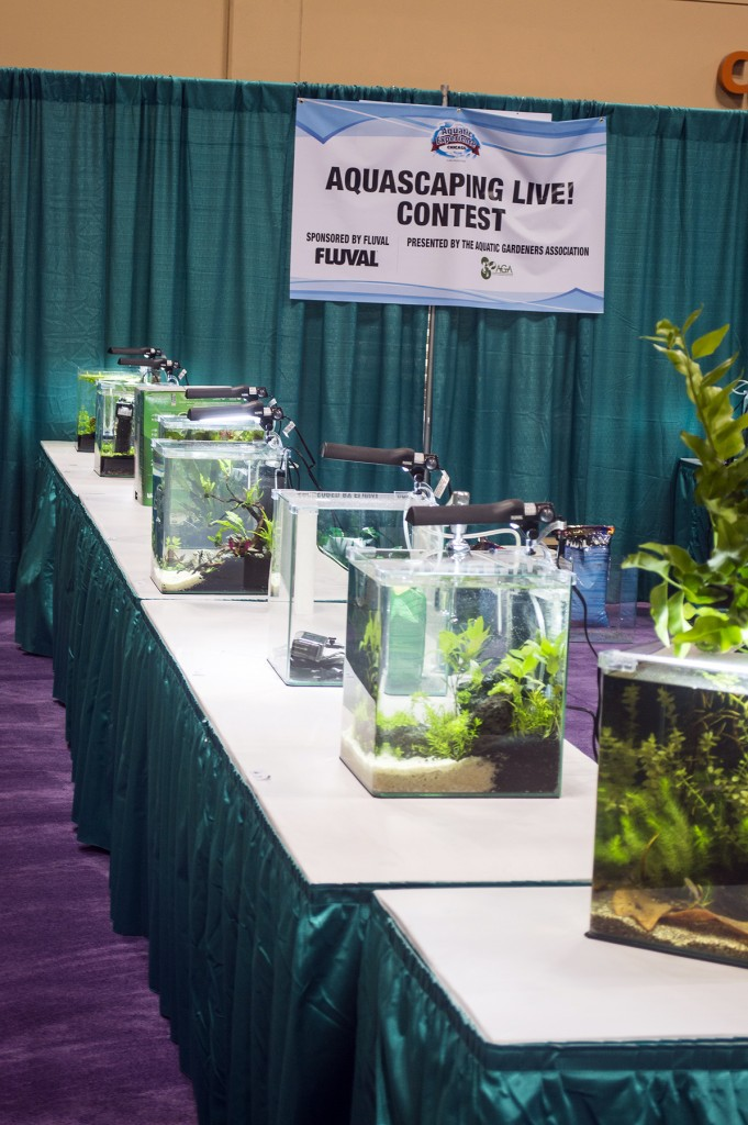 Final entries for the Aquascaping Live! contest during Aquatic Experience - Chicago 2014. Image by Dan Woudenberg/LuCorp Marketing for the World Pet Association.