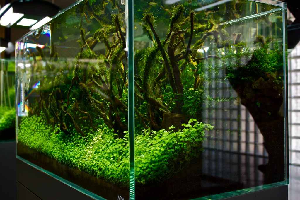 Just one example of the ever-changing Nature Aquariums on display in the ADA Gallery in Niigata, Japan, photographed by Benjamin Ruttenberg in 2010 | CC BY-SA 2.0