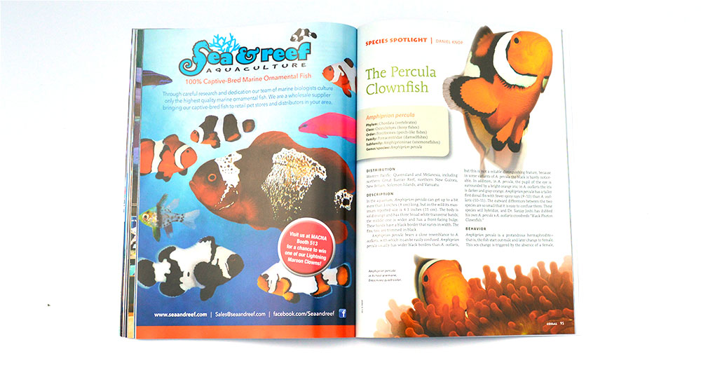 "Keeping with our theme of forgiving marinelife this issue, our Species Spotlight shines brightly on the classic ""True"" Percula Clownfish, Amphiprion percula."