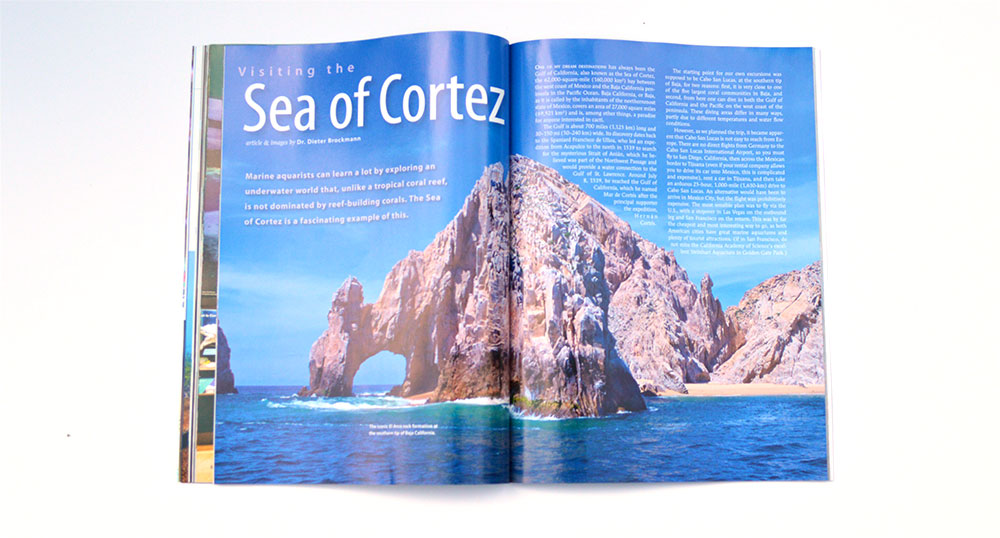Travel with Dr. Dieter Brockmann as he visits and dives the Sea of Cortez.