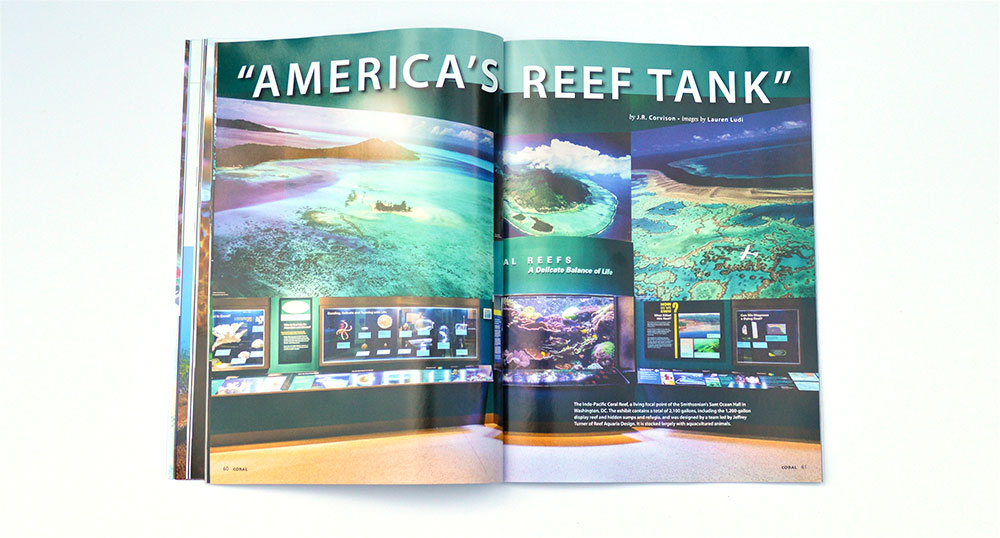 """America's Reef Tank"" by J.R. Corvison, images by Lauren Ludi, goes behind the scenes of the Smithsonian's Sant Ocean Hall aquarium."