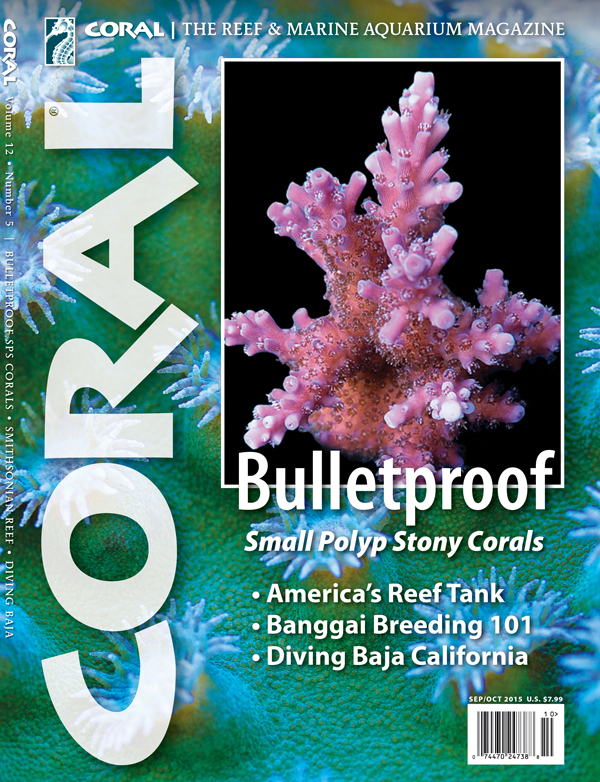 The cover of BULLETPROOF CORALS, our feature for the September / October 2015 issue of CORAL Magazine. We look at the corals with proven track records and selected reader wisdom for the aquarist starting out with small polyp stony (SPS) corals.