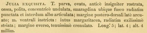 Julia exquisita species description.