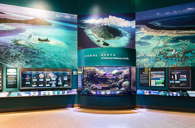 The only living exhibit in the Smithsonian's Sant Ocean Hall, a 2,000-gallon reef system is seen by millions of visitors each year.