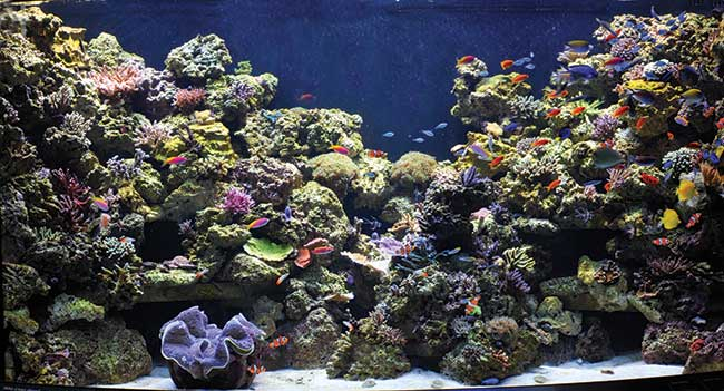 The reef at its grand opening in 2009. Compare to images above to see how planted frags have filled in the reefscape. Matt Wittenrich image.