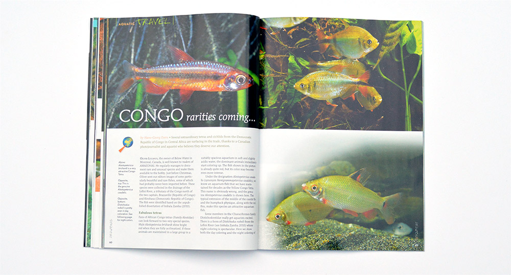 Hans-George Evers reveals several new fishes surfacing in the trade in Congo Rarities Coming...