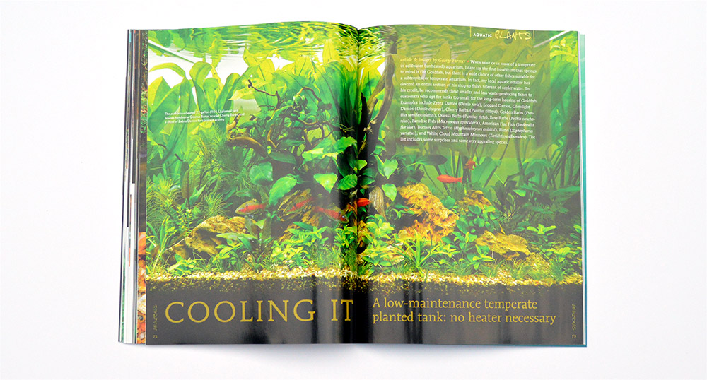 "Odessa Barbs feature prominently in George Farmer's unheated planted aquarium. Learn more in ""Cooling It - A low-maintenance temperate planted tank: no heater necessary"""
