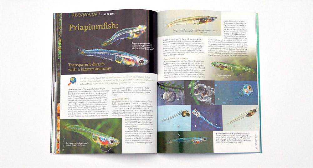 Ralf Britz discusses Priapiumfish: Transparent dwarfs with a bizarre anatomy.