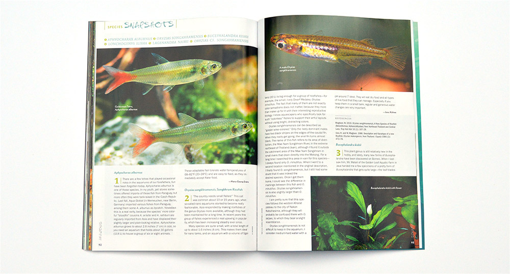 This issue's Species Snapshots include  Aphyocharax alburnus, Oryzias songkhramensis, Bucephalandra kishii, Lonchogenys ilisha, Lagenandra nairii, and Oryzias cf. songkharmensis, with contributions by Hans-Georg Evers and Jens Kühne.