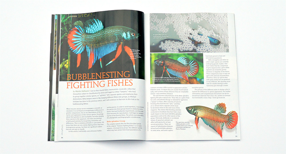 Martin Hallman provides an overview of the Bubblenesting Fighting Fishes, continuing our Wild Betta feature.
