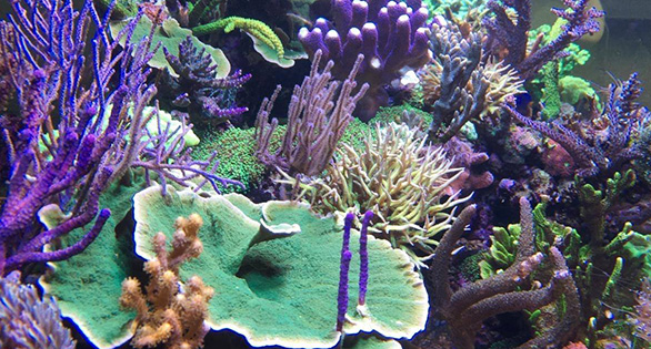 A glimpse at Daniel Knop's latest reef aquarium project, just over a year old in this image.
