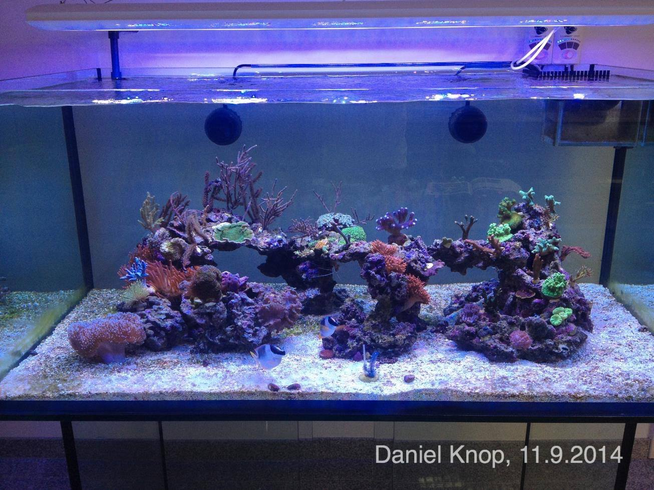 Knop's latest reef aquarium, situated in his office, as photographed September 11th, 2014.