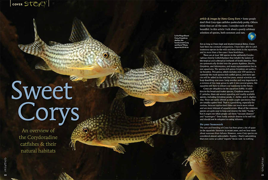 Opening spread to almost two dozen pages of cover features section devoted to Corydoras Species & Habitats, with an introduction by Cory expert and AMAZONAS German Editor Hans-Georg Evers.