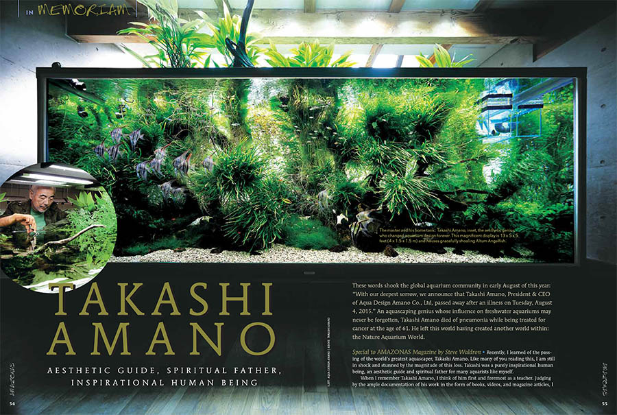 AMAZONAS contributor Steve Waldron offers a tribute to the recently departed aquascaping genius, Takashi Amano, who died in August at the age of 61. The Master's own magnificent home aquarium in Japan is shown here.