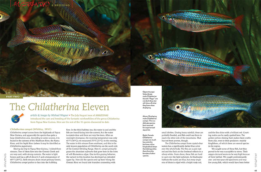 For lovers of the sleek, peaceful rainbowfishes of Australia and Papua New Guinea, the small (11-species) genus Chilatherina is a favorite. Michael Wagner describes their origins and their distinctive charms.