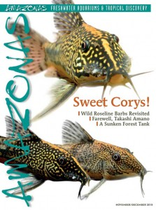 Cover with three eyecatching Bearded Corys, Scleromystax barbatus, photographed by Hans-Georg Evers.