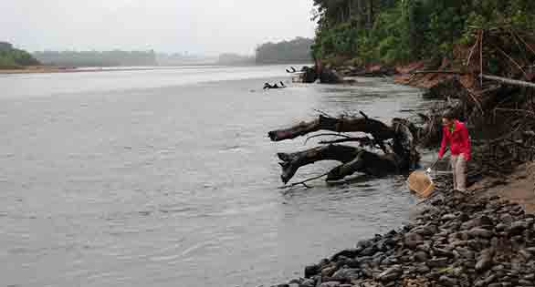 Texas A&M student Elizabeth Marchio dip-netting on a shore in Madre de Dios, Peru.
