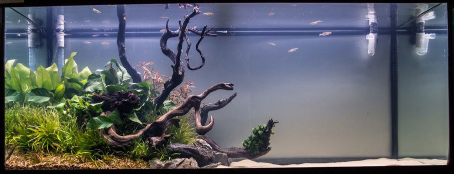 Another entry in the Large Tank category, this one featuring a large expanse of open sandy substrate.