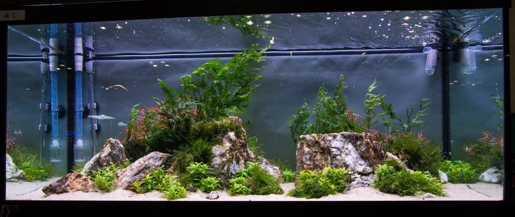 A third entry in the Large Tank category from the 2014 Aquascaping Live! contest.