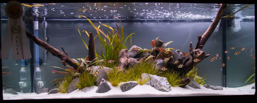 This large tank entry garnered 3rd place in the 2014 Aquascaping Live! competition.