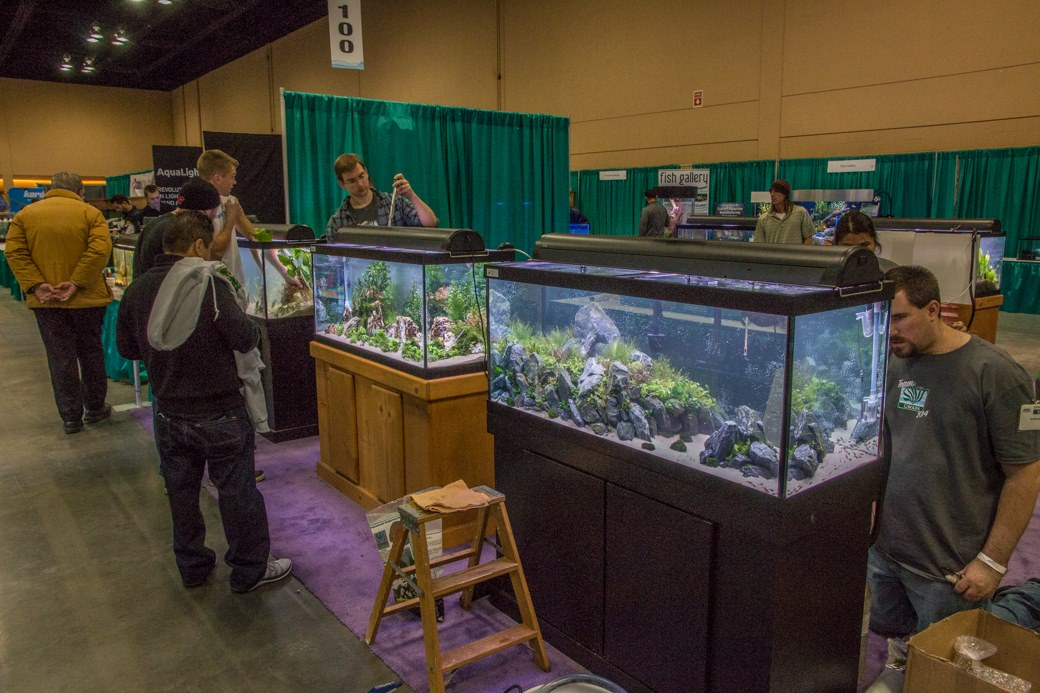 The large tank competition at the 2014 Aquatic Experience - Chicago.
