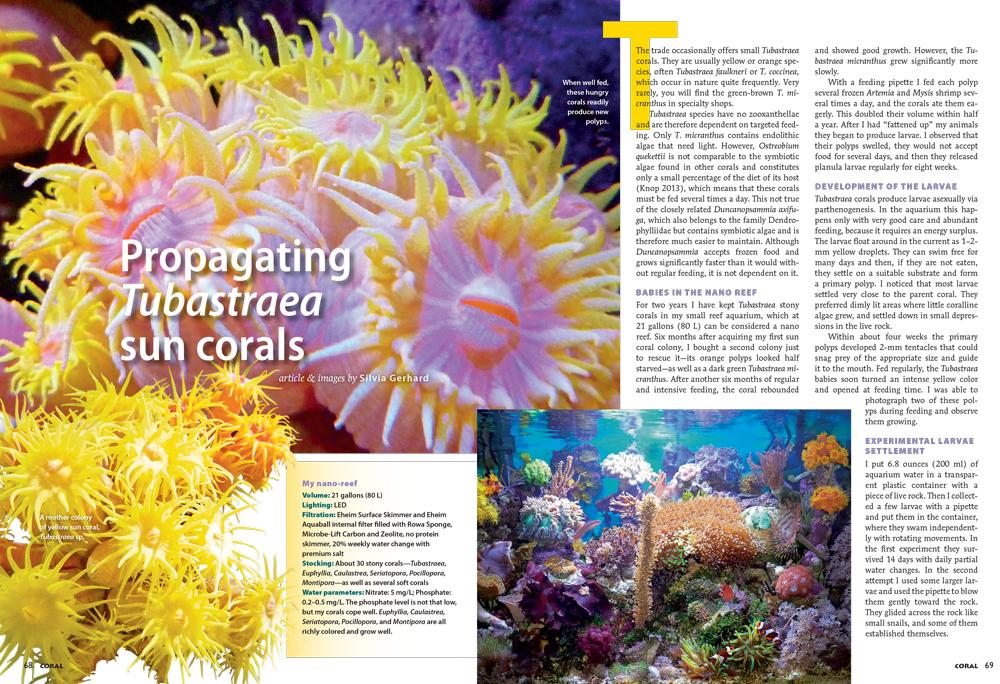 68_69-Sun-Corals_1000px