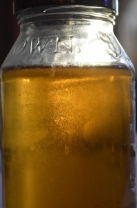 A vinegar eel culture, about three years old, that probably hadn't been touched for two years!