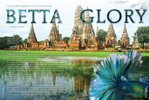 COVER FEATURE SECTION leads off by taking the reader to Thailand to visit the homeland of Betta splendens and a major source of farmed Fighting Fish for the world. Text and images by Michael J. Tuccinardi.