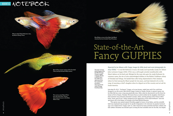 NOTEBOOK Aquarium News: Joe Mason reports on the World Guppy Contest for 2015, held in Tampa, Florida, and a place to judge the state of the Guppy Breeding arts today.