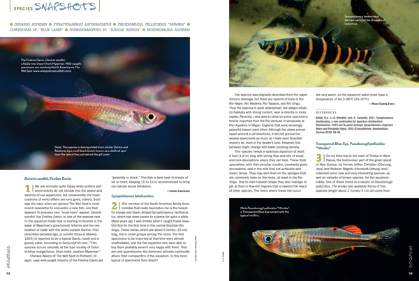 New and interesting livestock moving through the aquarium trade catches the attention of AMAZONAS editors.