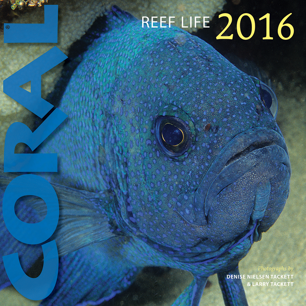 From the Editors of CORAL, the perennial favorite REEF LIFE Wall Calendar is now shipping for 2016. Know this species?  (See bottom of page for the identification.) Click to enlarge.