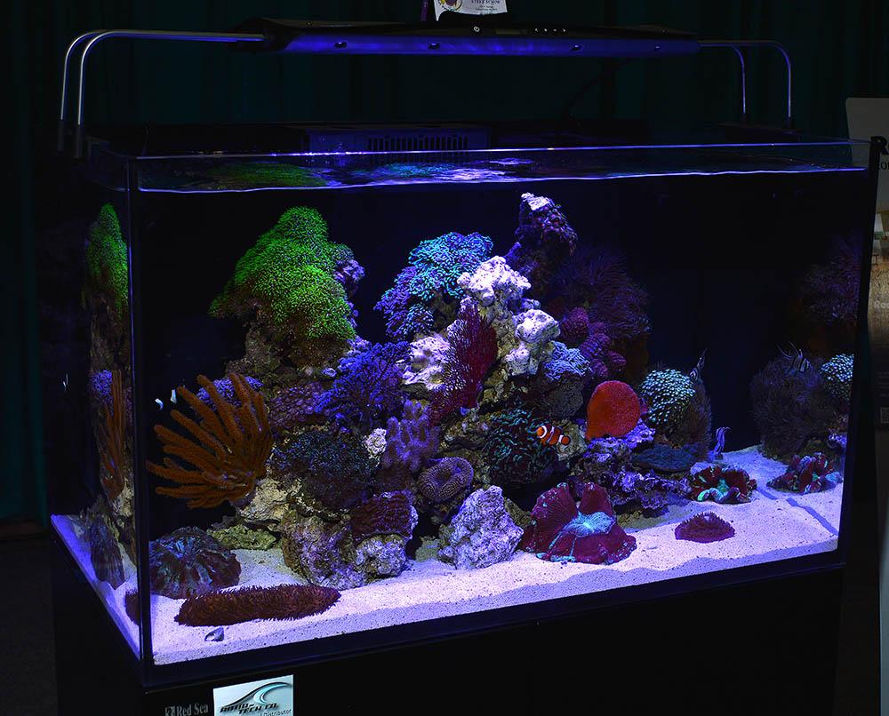 "Nicely aquascaped showing a mix of ""soft corals"" and LPS, the aquarium reminds us that a beautiful reef aquarium can be more than colorful Acropora sticks."