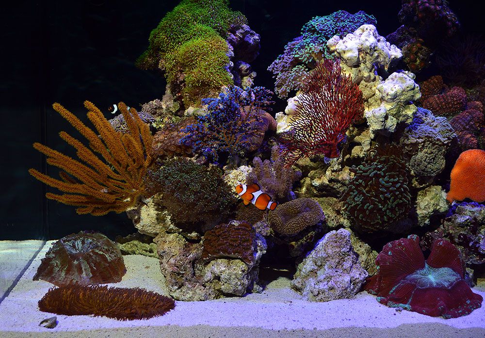 A little bit of everything makes this tank quite the visual buffet.