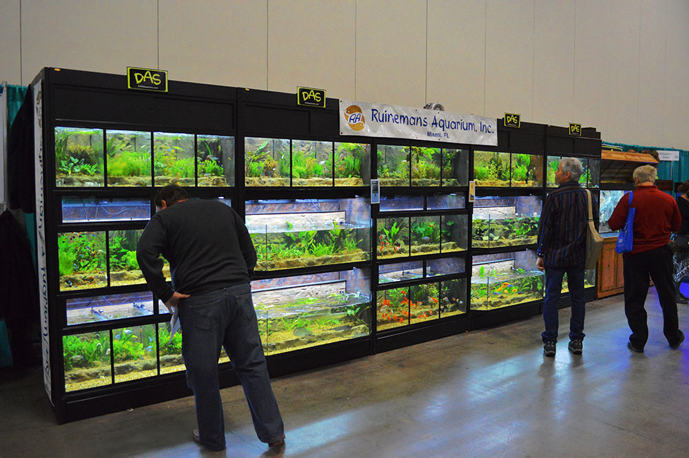Dozens of aquariums featuring the fishes of FTFFA associate member Riunemans Aquarium were immediately adjacent to the main FTFFA display.
