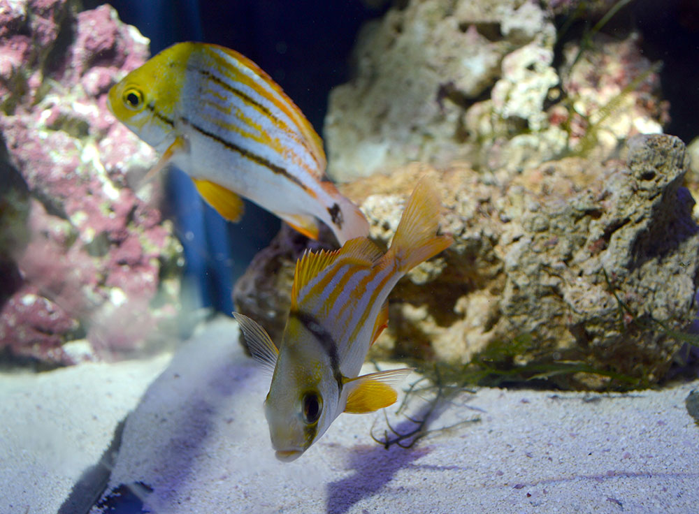 Aquatic experience chicago 2015 reels in more than 6 200 for Florida tropical fish