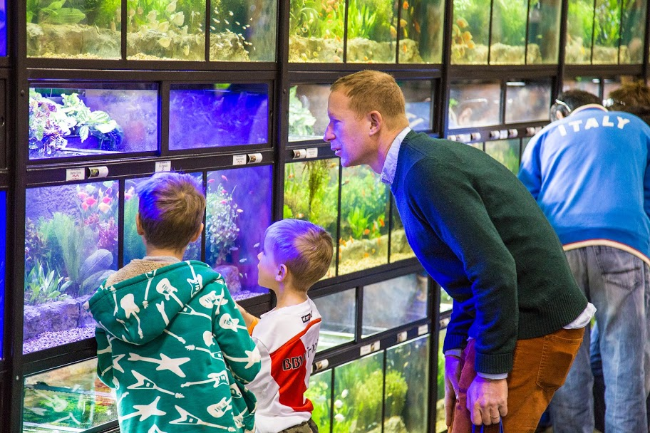 The Florida Tropical Fish Farmers Association display of over 60 tanks at Aquatic Experience - Chicago 2015. Image by Dan Woudenberg/LuCorp Marketing for the World Pet Association.