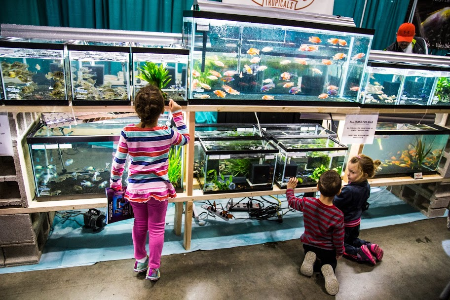 Aquatic Experience - Chicago 2015. Image by Dan Woudenberg/LuCorp Marketing for the World Pet Association.