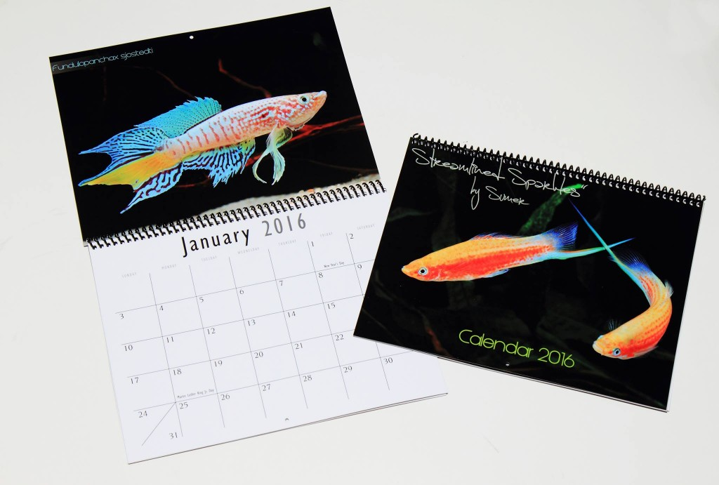 The 2016 Streamlined Sparkles Freshwater Aquarium Fish Calendar is on sale now.