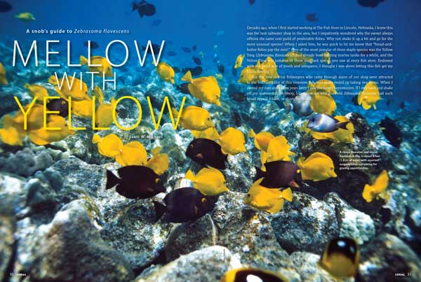 Reef fishes expert Scott Michael takes a fresh and appreciative look at the Yellow Tang and offers his views on how to keep them in the marine aquarium.