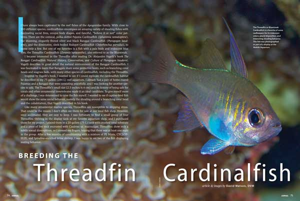 Veterinarian-by-day, marine fish basement breeder by night, Dr. David Watson tells how he has succeeded with the challenging Threadfin Cardinalfish.