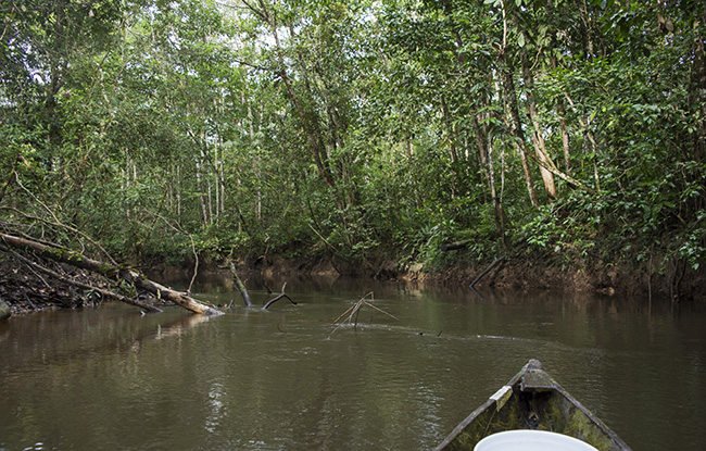Exploring a creek off the Rio Tacana by canoe