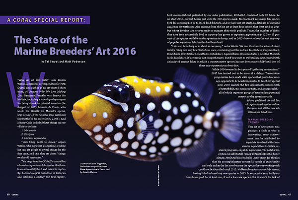 CORAL Magazine's Annual Report on the state of marine aquarium breeder efforts, with cultured Clown Trigger being sold by Quality Marine and raised by Biota Aquaculture, Palau. Image: Eli Fleishauer.