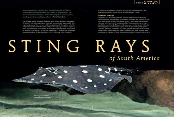 "COVER STORY: Stingrays play an elite, specialty role in the aquarium world, and the few aquarists who deal intensively with South American stingrays have a limited number of available species. Hans-Georg Everes provides some background knowledge about these cartilaginous fishes in ""Stingrays of South America"""
