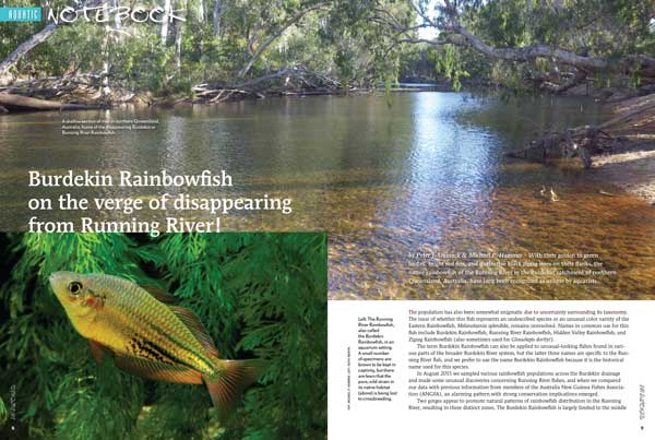 NOTEBOOK: Peter J Unmack and Michael P. Hammer share concerns that AU's Burdekin Rainbowfish is on Verge of Demise; The Australian and New Guinea Fishes Association (ANGFA) isn't sitting idly by. Discover their plans to secure the species before it's gone.