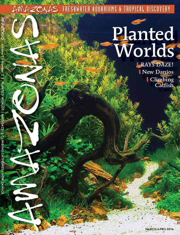 AMAZONAS Planned Cover 5-2: Planted Worlds with a Portfolio of award-winning aquascapes from the AGA 2015 Competition.