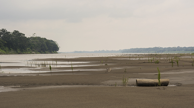 Sprawling sandy beaches along the Amazon outside Leticia, Colombia
