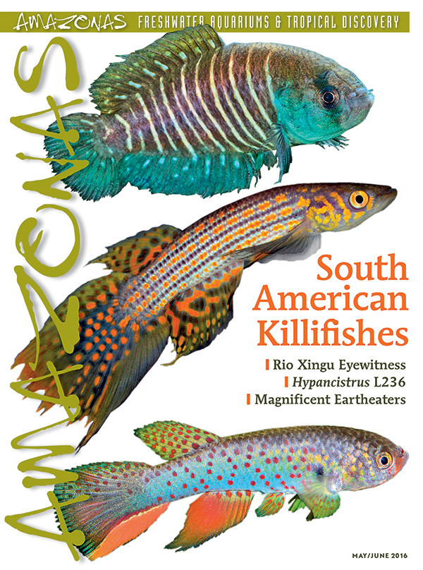 It's in the mail: cover of AMAZONAS Magazine, Volume 5, Number 3. On the cover from top to bottom, Austrolebias arachan (image by R. Pohlmann), Moema quii (image by L. Peck), and Rachovia pyropunctata (image by F. Vermuelen).
