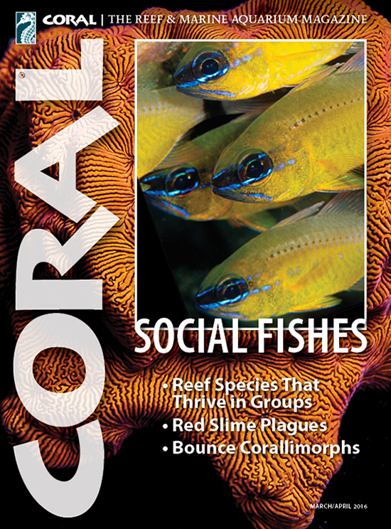 Preview cover of CORAL Magazine for March/April 2016, with a publication date of March 8th. Cover image by Scott W. Michael, Ostorhinchus aureus shoal.