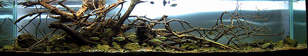 """""""Mixteco River"""" Winner Biotope Aquarium. Bernardo Salas Perez , Huajuapan de Leon, Oaxaca, México"""