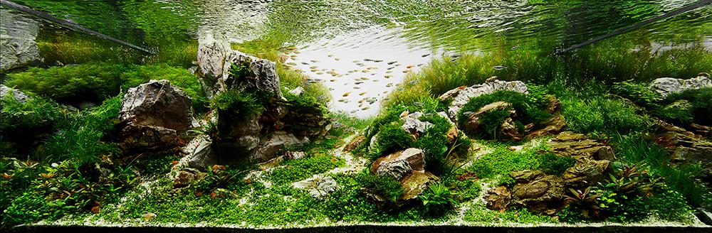 """Silent Awakening"" Aquatic Garden 320-L or larger. Fernando Boturao Francischelli, São Paulo, Brazil"